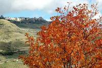 autunno   - Petralia soprana (1078 clic)
