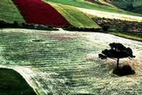 colori della natura   - Castellana sicula (1409 clic)