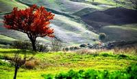 autunno   - Petralia soprana (1119 clic)