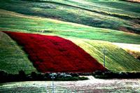 colori della natura   - Castellana sicula (1882 clic)