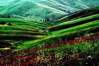 colori della natura   - Castellana sicula (1580 clic)