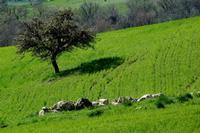 primavera   - Petralia soprana (1196 clic)
