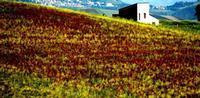 colori   - Castellana sicula (548 clic)