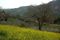 primavera   - Gangi (1493 clic)