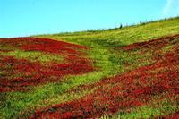 colori   - Castellana sicula (1209 clic)