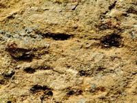maschera di pietra   - Castellana sicula (543 clic)