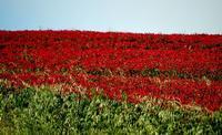 colori   - Castellana sicula (1342 clic)