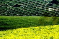 colori   - Castellana sicula (1453 clic)