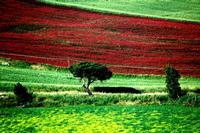 colori   - Castellana sicula (15561 clic)