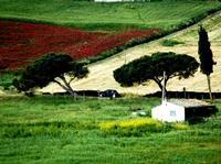 colori   - Castellana sicula (1379 clic)