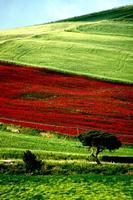 colori   - Castellana sicula (1247 clic)
