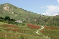colori della natura paesaggio montano delle madonie-Castellana Sicula  - Castellana sicula (3708 clic)