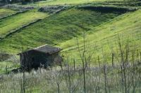 paesaggio agrario   - Castellana sicula (2283 clic)