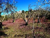 panorama   - Petralia sottana (562 clic)