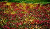 colori   - Petralia sottana (559 clic)