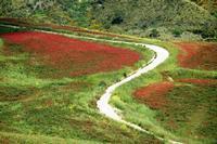 colori   - Castellana sicula (2225 clic)
