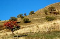 autunno   - Petralia soprana (1274 clic)