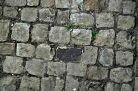 cerca l'intruso   - Petralia sottana (598 clic)