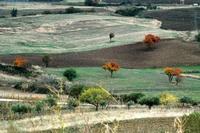 autunno   - Petralia soprana (1174 clic)