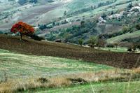 autunno   - Petralia soprana (1256 clic)