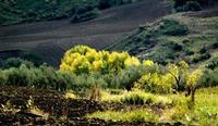colori   - Petralia soprana (901 clic)