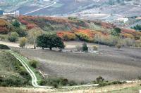 autunno   - Petralia soprana (1032 clic)
