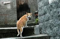 Animali domestici  - Montagnareale (2067 clic)