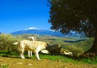 Etna da Troina (EN) (6334 clic)
