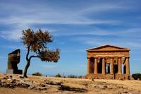 Valle dei Templi Valle dei Templi con le statue di Mitoraj  - Agrigento (14472 clic)