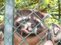 LIBERTA'!!! - Zoo Safari di Paternò  - Paternò (3984 clic)
