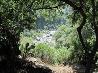 Quadro naturale d'Alcantara (2717 clic)