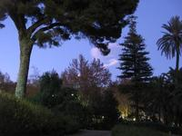 Villa Bellini - Piccolo bosco catanese Angolo di verde al Giardino Bellini di Catania. Visita anche http://www.auditorealessio.it/italia/catania.php per vedere tantissime altre fotografie su Catania!  - Catania (2079 clic)