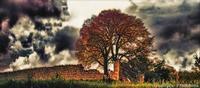 Lonelytree   - Ragusa (2592 clic)