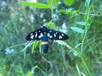 insetto   - San mauro castelverde (2122 clic)
