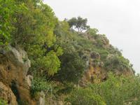 Macchia mediterranea nei pressi del sito archeologico S. Teodoro   - Acquedolci (2625 clic)