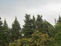 Contrasto arboreo nei pressi del sito archeologico S. Teodoro   - Acquedolci (2705 clic)