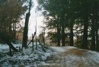 Bosco innevato dei Nebrodi   - Militello rosmarino (3055 clic)