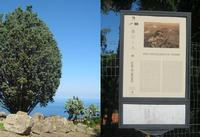 Area Archeologica   - Tindari (2414 clic)