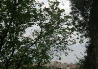 Scorcio panoramico da S. Teodoro   - Acquedolci (2334 clic)