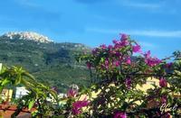 Sull0o sfondo San Marco D'Alunzio   - Torrenova (1222 clic)