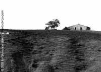 Provincia di  Villarosa Enna Campagne  - Enna (3662 clic)