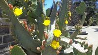Vegetazione mediterranea Alcune piante del Parco dell'Arte di San Giovanni8 La Punta loc. Trappeto  - San giovanni la punta (1914 clic)