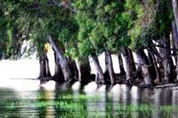 Lago Pozzillo.   - Regalbuto (2347 clic)