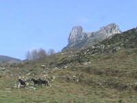 Rocca Salvatesta: panorama con cavalli  - Novara di sicilia (4954 clic)