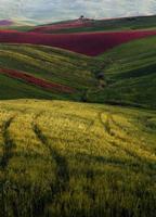 « Ognuno sta solo sul cuor della terra trafitto da un raggio di sole: ed è subito sera. »   Alia campi di grano e sulla.  - Alia (3459 clic)