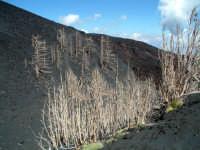 quota 2100 m  - Etna (2984 clic)