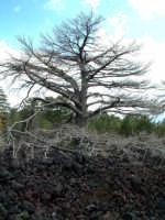 quota 1800m, eruzione 2002  - Etna (3038 clic)