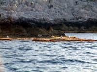 gabbiani  - Isola delle femmine (5444 clic)