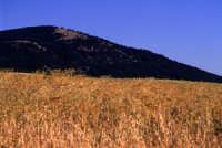 Un campo di grano e sullo sfondo la Montagna Grande a Fulgatore  - Fulgatore (5206 clic)
