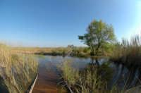 Riserva del fiume Belice nel periodo di piena  - Selinunte (2977 clic)
